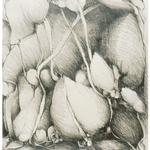 Rock Shelter III, 1985, 26 x 20 inches, graphite on rives lightweight